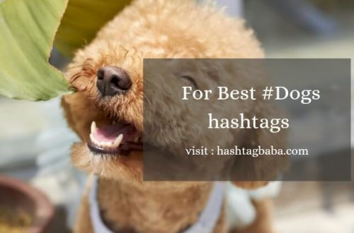 Dog hashtags for Instagram Image by Hashtag baba
