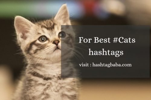 Cats Hashtags for Instagram Image by Hashtag baba